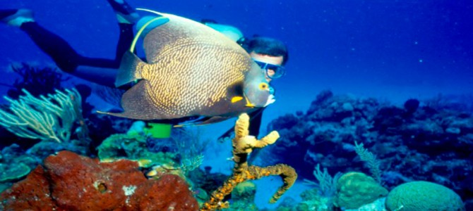 5 diving spots in Cuba that will make you say Wow!